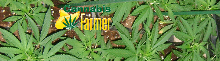 Summer cannabis grow 2016