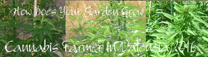 Marijuana and cannabis garden grow Valencia 2016