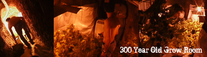 Cannabis Farmer Visits 300 year old grow