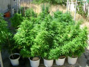 aug 23 grow