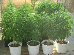july 25 grow