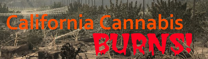 Wildfires Destroy California Cannabis Crops